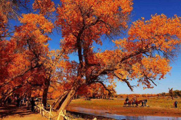内蒙古西北自驾:额济纳旗胡杨林-张掖丹霞地貌-若尔盖大草原9日自驾游